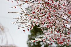 Sled Riding 2013-31 (TheDarrenSharp) Tags: winter evelyn sledriding