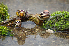 World's Busiest Bridge (Vie Lipowski) Tags: nature water moss pond wildlife snail detritivore worldsbusiestbridge