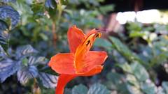 Samsung S4 closeup. (Bob Palin) Tags: california 15fav usa flower macro instantfave