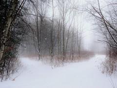 Au coeur de la fort. At the heart of the forest (Amiela40) Tags: two snow tree forest one poetry heart path snowstorm coeur un deux neige arbre sentier chemin fort bois croisement temptedeneige bestcapturesaoi