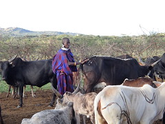 Serengeti - Massai home