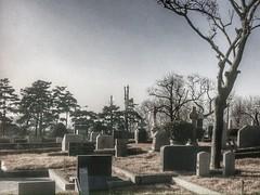Yanghwajin Foreigners' Cemetery  (travel oriented) Tags: korea seoul   mapo hapjeong mapogu   hapjeongdong  yanghwajinforeignerscemetery