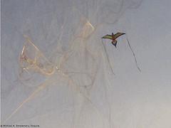 Aerial Acrobatics (smolenskylaw) Tags: usa newjersey unitedstates unitedstatesofamerica nj margate atlanticcounty 609 dirtyjerz dirtyjersey margatecity 08402 dirtyjerzey