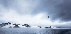 AntarcticaPrints_02 (NateHassler) Tags: ocean travel cold bird water penguin boat antarctica cliffs rough