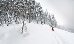 """Row yer boat trees"" Chance Roe Creek Feb 22,23 2014      -7 (Pat Mulrooney) Tags: snow canada zoe whistler ross britishcolumbia danielle powder g3 sled squamish snowmobile skitouring seatosky coastmountains arcteryx chancecreek backcountrysnowboarding roecreek g3skins patmulrooneyphotography skidoosummitrevxm g3blacksheepcarbon"