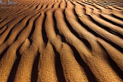 Golden Lines! - Alsalmi Desert - Kuwait (AlkhashabNawaf) Tags: hot texture lines yellow way gold golden sand nikon desert dunes kuwait nikkor  d800 nawaf 1635          alsalmi alkhashab