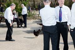 (Peter de Krom) Tags: chicken campagne opa buiten verkiezingen politiek gouda pauze stemmen orkest muzikanten volksvertegenwoordigingkip