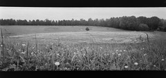 (Peter?) Tags: uk england white black film analog point focus shoot cross britain united buckinghamshire 28mm great wide young free kingdom pic snap panoramic peter 200 vista analogue milton keynes agfa developed f11