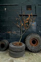 Lonely tree (coconinoco) Tags: black tree wall rust beech tyres effratree