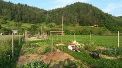njiva (peter++) Tags: people garden vrt slovenia jana slovenija njiva janar ole zolsce