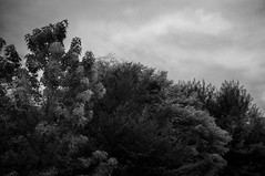 #41 (UBU ♛) Tags: blancoynegro blackwhite noiretblanc blues biancoenero blupolvere ©ubu unamusicaintesta landscapeinblues bluubu luciombreepiccolicristalli