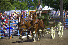 Two Horse Team (swong95765) Tags: wagon horses team ride rodeo spectators show animal