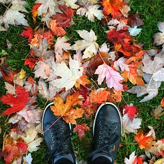 Hello Fall (CNorth2) Tags: leaves fall colors black shoes outdoor autumnleaves