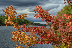 The Colours of Autumn (Lindaw9) Tags: autumn leaves colours maple clouds sky shanty bay lake october