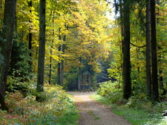 autumn path #2 (Stiller Beobachter) Tags: autumn sunshine path forest trees