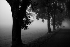 Autumn walk (akarakoc) Tags: black white monochrome walking morning foggy fog fujifilm fujixseries xf1655 fuji tree silhouette xpro2 autumn