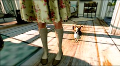 ...little friend... (lindini2) Tags: secondlife sl l2studio shorelinehouse lhooq mikunch zenith birdy dog doggie chihuahua