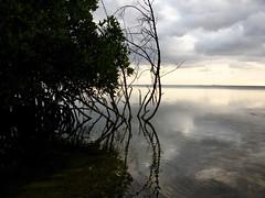 con esto me quedo (jvcluis) Tags: xcalak quintana roo playa recuerdos memorias viaje mar amanecer plantas algas frio viento calor sentimientos