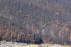 Excelsior Wildfire burn at Medicine Lake (Jade Prints) Tags: jasper canada rocky mountains rockies alberta medicinelake