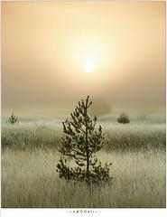 Waiting for Christmas (nandOOnline) Tags: mist morning strabrecht koud sunrise december nature nevel landscape vorst zonsopkomst dauw natuur strabrechtse heide cold fog ochtend landschap frost