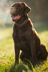 taylor_tal-1 (Florian Jakob Rothlehner) Tags: hund hasutier drausen blitz strobist 6d canon bokeh lastolite firefly yongnuo