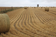 Birds with hay bales in the farm. (Go Go Janet) Tags: harvest line pattern