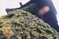 (Chen Yen-Chi) Tags: olympus kyoto film japan