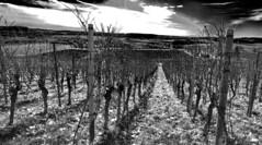 Wunnenstein (EdgarJa) Tags: deutschland germany alemania baden wrttemberg wein vino wine wineyard viedo vignoble berg wolken weinreben vigne vid