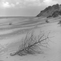 Beach Tree (the underlord) Tags: kodakd76 15minutesat11 20degreesc bronicasqb zenzanons150mmf35 neopanacros100 400asa fujineopanacros100 formbypoint beach christmastree sanddunes formby mediumformat 120film squareformat november noiretblanc blancoynegro biancoenero svartochvitt dduagwyn schwarzweis