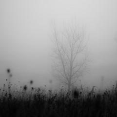 Lakeside Fog 047 (noahbw) Tags: d5000 nikon abstract autumn blackwhite blackandwhite bw fog foggy forest lake landscape light minimal minimalism mist misty monochrome natural noahbw prairie quiet shore shoreline silhouette square still stillness trees woods