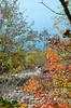 Rhus [Sgonico - 29 October 2016] (Doc. Ing.) Tags: 2016 trieste veneziagiulia friuliveneziagiulia fvg nordest italy carso sgonico prosecco ts fall autumn leaves sea mediterranean adriatic foliage somaco