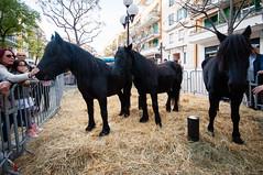 (anto291) Tags: cavalli cagnessurmer châtaigne fêtedelachâtaigne festadellacastagna castagna