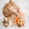 Freyja made a new friend. 🐱 🐟 #dilutetorbie #torbie #torbiecat #rescuecat #formerstray #cat #catstagram #catsofinstagram (Jenn ♥) Tags: ifttt instagram