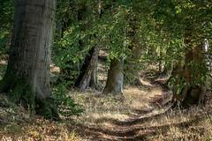 Waldweg (Petra R.) Tags: weg wald baum herbst grün landschaft mecklenburg