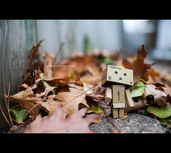 Enough Already (Mark Somerville.) Tags: danbo mark somerville fall leaves 5d mkii canon 35l burlington december chrustmas getting back it