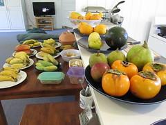 starr-161113-5872-Diospyros_kaki-local_fall_fruit_counter_and_table-Hawea_Pl_Olinda-Maui (Starr Environmental) Tags: diospyroskaki