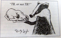 2013_06_120018 (t1) - TB or not TB (Gwydion M. Williams) Tags: uk greatbritain england funny britain satire humor humour badgers tb privateeye tuberculosis badgercull