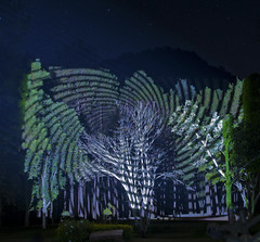 Tree Projection 6