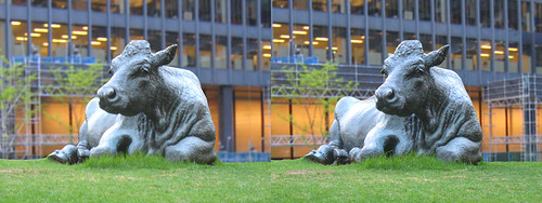 Toronto - Petrified Cow 3D Stereogram