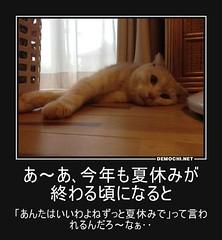 あ~あ、今年も夏休みが終わる頃になると 「あんたはいいわよねずっと夏休みで」って言われるんだろ~なぁ‥ #猫 #夏休み (Demochi.Net) Tags: life cute sexy japan fun japanese motivator culture 日本 ペット 猫 demotivator 金 家族 結婚 ゲイ 女 子供 おっぱい 愛犬 政治 社会 巨乳 文化 眼鏡 教育 demotivators 経済 女性 初恋 r18 女子 カップル 子猫 女装 お笑い motivators 会社 少子化 企業 ユーモア 恋 悪い 格差 風刺 一言 デモチ 大喜利