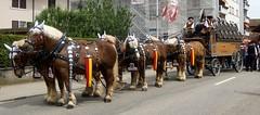 DSC01648 (imanh) Tags: horse switzerland paard iman zwitserland jodlerfest heijboer derendingen imanh