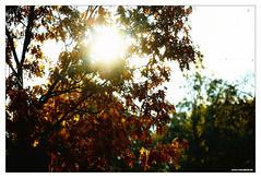 October 25 Outtake (Vlachbild) Tags: nature natur daily naturephotography outdoorphotography borderfx minoltaaf100mmf2 sonyslta99