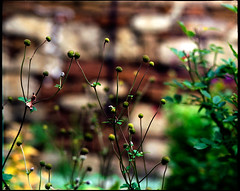 country garden (manni39) Tags: autumn mamiya film rural vintage mediumformat garden countryside fuji superia herbst vintagecamera 6x7 garten rollfilm fujisuperiaxtra400 rb67 lndlich sekor mittelformat moyenformat mamiyasekor mamiyasekor127mm38