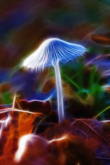 Fract Mushroom (Hugobian) Tags: autumn macro nature mushroom woodland fungi toadstool macrolife fractalius