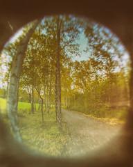 parklife. (angsthase.) Tags: autumn blur tree green fall leaves germany deutschland nrw grn bltter ruhrgebiet baum dortmund ruhrpott mft 2013 wideangleconverter tremonia micro43 olympuspenepl1 mzuikodigital1442mm13556iir