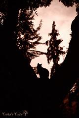 night is coming (Tania's Tales) Tags: park trees sunset shadow black tree nature animal silhouette night cat            shadowfigure