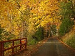 (Vlado V) Tags: autumn ireland dublin tree forest hill olympus larch e510
