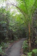 DSC_8652 (Nikosan Photographie) Tags: usa florida unitedstatesofamerica everglades evergladesnationalpark floride etatsunis