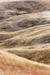 Grasslands Hills Abstract (Free Roaming Photography) Tags: canada abstract west grass nationalpark hill hills western vegetation northamerica prairie saskatchewan hilly rolling rollinghills grasslands grassy grasslandsnationalpark valmarie