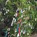 Trees_of_Loop_360_2013_041